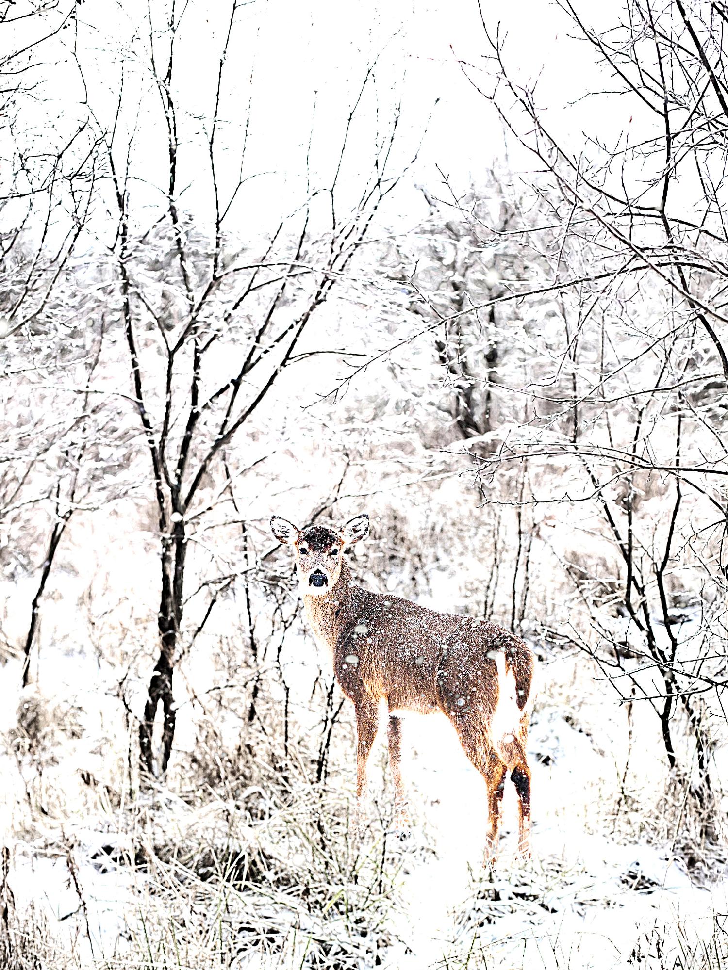 Xmas_deer_2020